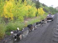Winterhawk Dogsled Adventures in Leadville, CO