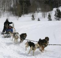 Winterhawk Dogsled Adventures in Vail Valley, CO