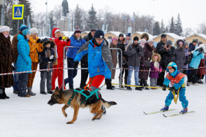 ski joring kid with dog