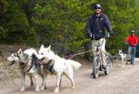 Snow Caps Sled Dogs in Breckenridge, CO