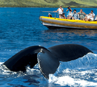 Pacific Whale Foundation in Maui, HI